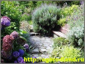 Растения в средиземноморском саду