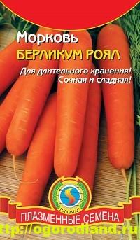 Сорта моркови. Обзор лучших сортов с описанием 12