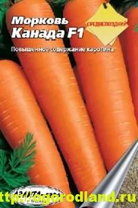 Сорта моркови. Обзор лучших сортов с описанием 11