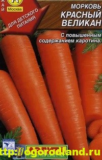 Сорта моркови. Обзор лучших сортов с описанием 13