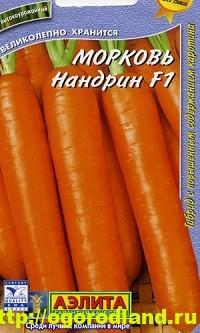 Сорта моркови. Обзор лучших сортов с описанием 3