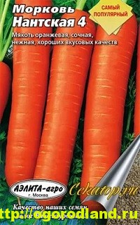 Сорта моркови. Обзор лучших сортов с описанием 6