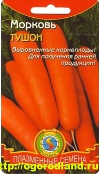 Сорта моркови. Обзор лучших сортов с описанием 4