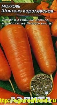Сорта моркови. Обзор лучших сортов с описанием 8