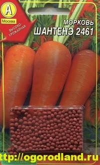 Сорта моркови. Обзор лучших сортов с описанием 7
