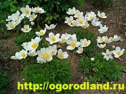 Весенние цветы для дачи. Апрельские и майские цветы 7