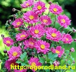 Весенние цветы для дачи. Апрельские и майские цветы 10