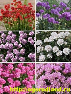 Весенние цветы для дачи. Апрельские и майские цветы 11