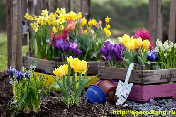 Весенние цветы для дачи. Апрельские и майские цветы 1