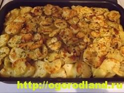 Курица с картошкой в духовке. Пошаговый рецепт с фото 22