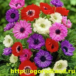 Весенние цветы для дачи. Апрельские и майские цветы 8