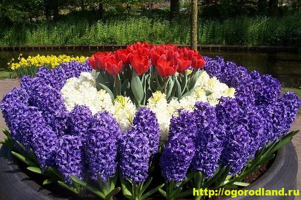 цветы многолетние с фото