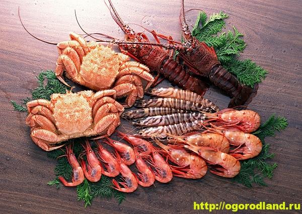 Морепродукты. Полезные свойства морских деликатесов