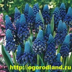 Весенние цветы для дачи. Апрельские и майские цветы 5