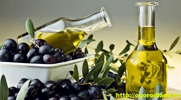 Оливковое масло. Полезные свойства