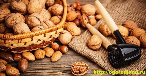 Орехи. Полезные свойства и вред