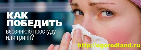 Простуда и грипп. Диета против инфекции