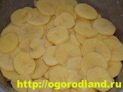 Рыба с картошкой слоями в духовке 14