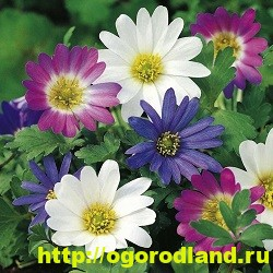 Весенние цветы для дачи. Апрельские и майские цветы 9