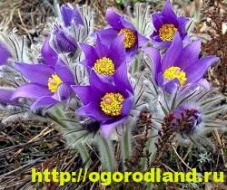 Весенние цветы для дачи. Апрельские и майские цветы 2