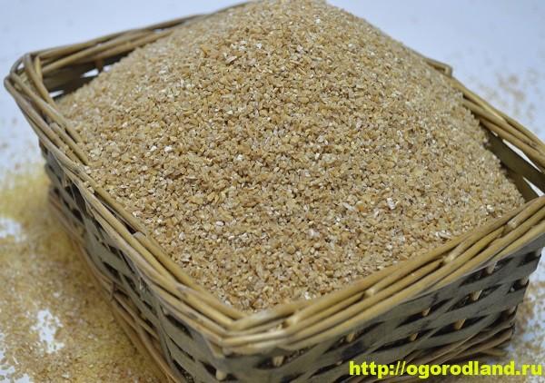 Пшеничная крупа. Польза в профилактике болезней