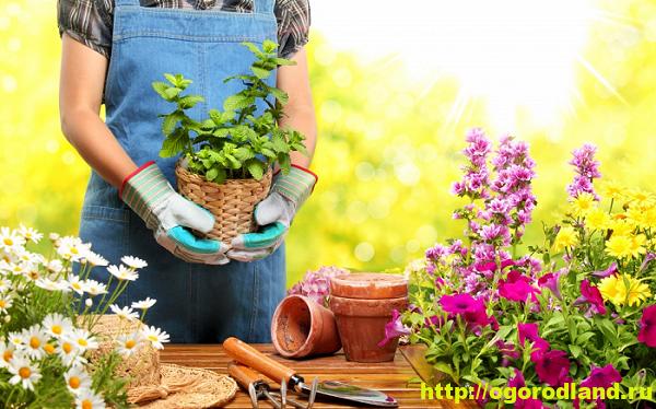 Садовые цветы. Советы цветоводам от цветоводов 16