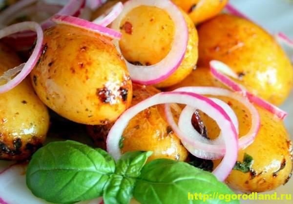 Блюда из картофеля. 11 оригинальных рецептов
