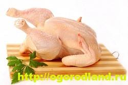 Салаты с курицей. Несколько простых рецептов приготовления