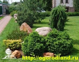 Хвойные растения (хвойники). Композиции из хвойных растений