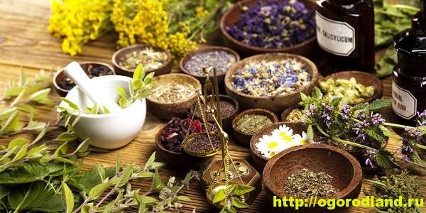 Травы. Лекарственные свойства трав