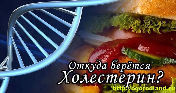 Холестерин. Снижение холестерина в крови