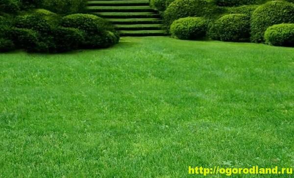Виды газона