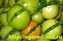 Зеленые помидоры на зиму. Рецепты консервирования 5