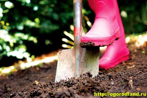 Осенняя обработка почвы на садово-огородном участке