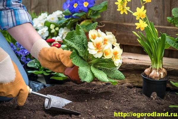 Осенняя посадка цветочных многолетников - крайние сроки 1