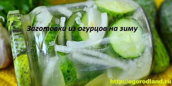 Огурцы на зиму. Рецепты зимних заготовок из огурцов