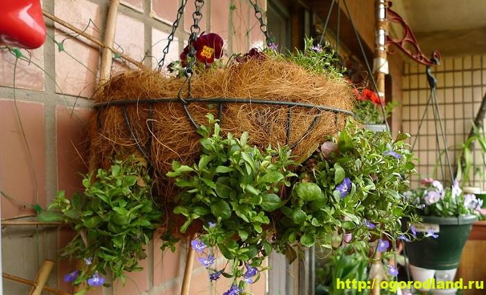 Красивый цветник на даче – цветущий шар в воздухе 3