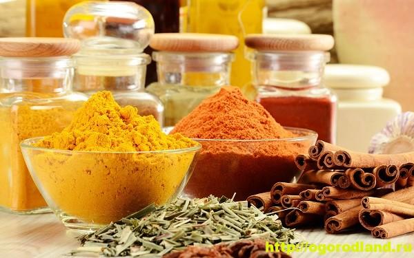Специи и приправы и их применение в кулинарии и медицине