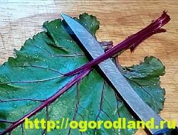 Голубцы в свекольных листьях. Пошаговый рецепт приготовления