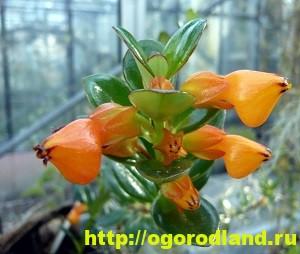 Необычные растения для вашего дома 5