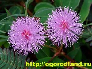Необычные растения для вашего дома 8
