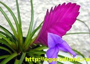 Необычные растения для вашего дома 4