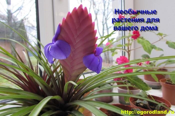 Необычные растения для вашего дома 1