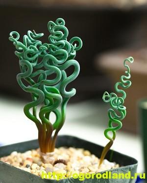 Необычные растения для вашего дома