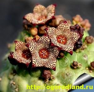 Необычные растения для вашего дома 2