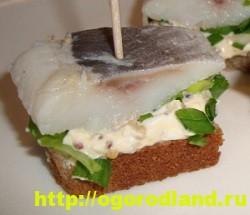 Закуски с сельдью. Вкусные холодные закуски для праздника