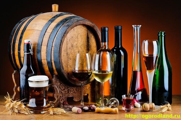 Как правильно выбрать алкоголь 1