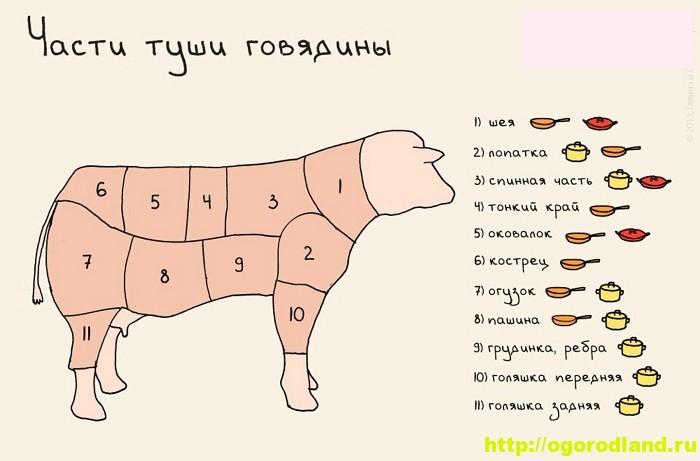 Как выбрать нужный отруб мяса для блюд из говядины