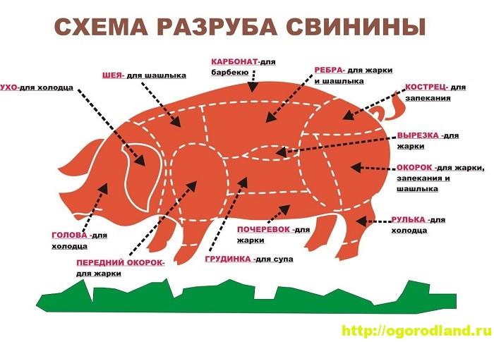 Как выбрать нужный отруб мяса для блюд из свинины