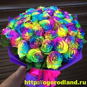 Редкие и необычные виды роз. Особенности выращивания